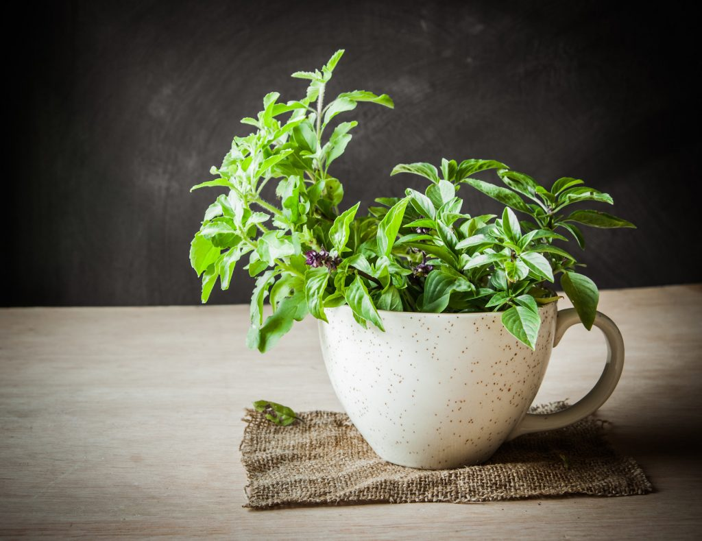 Relieve Stress Inflammation with Holy Basil