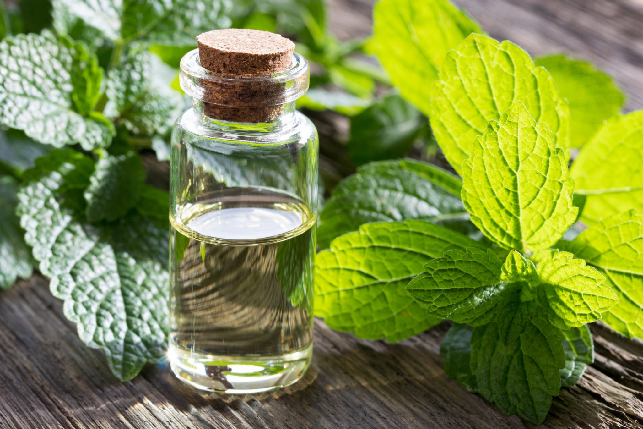 Lemon Balm for Anxiety by CleanFoodCrush